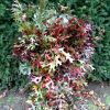Fall Oak Leaves in Floral Arrangements 10.23.17