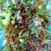10.22.18 Jewel Colored Oak Branches for sale.