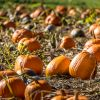 10.24.19 Kilchis River Pumpkin Patch & Corn Maze